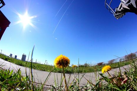 Frühling an der Wetterwarte Rheinstette