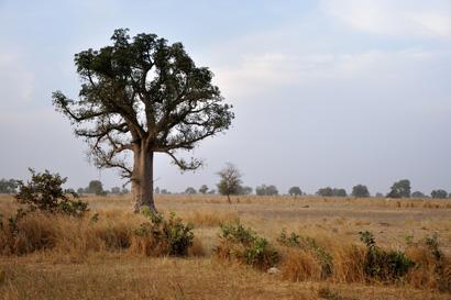 Savannenlandschaft im Senegal